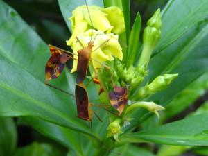 bug_n_flower