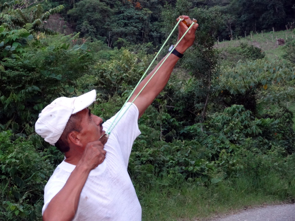 Language teacher Don Profirío Sampayo uses a slingshot to scare the crows from his cornfield .