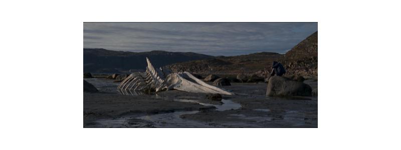 Whalebone1
